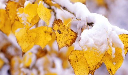 snow_frosted_autumn_leaves_long_goodbye.thumb.png